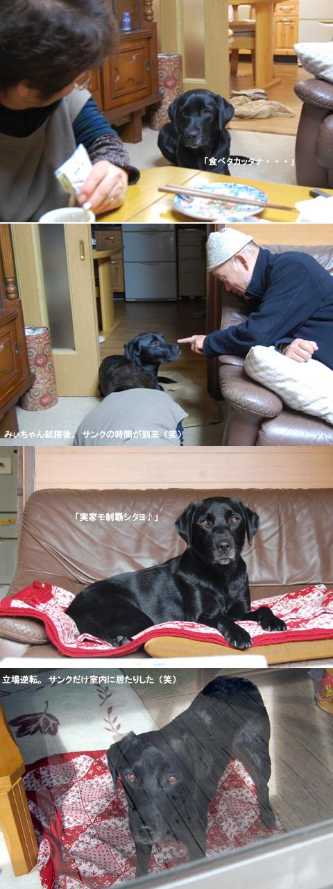 11.1実家でも自由犬.jpg