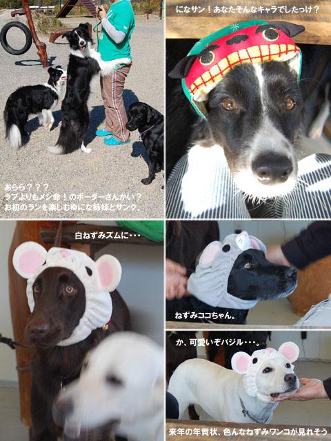 2007.11.3お年賀バジル.jpg